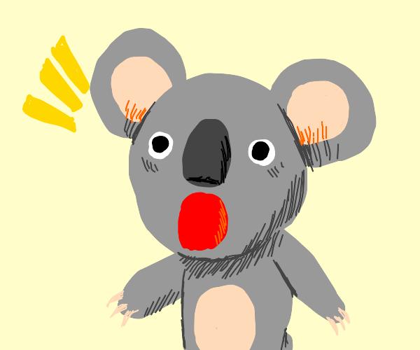 Surprised koala