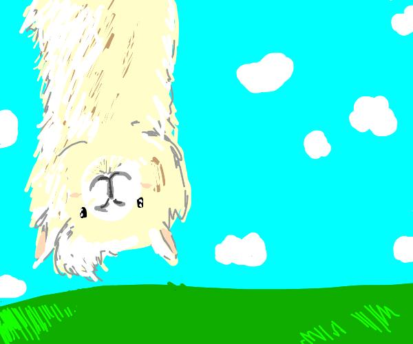 Upside down alpaca