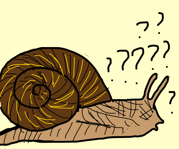 Confused snail