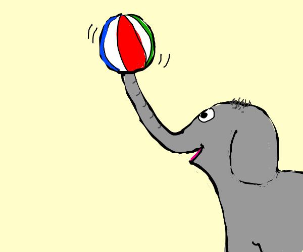 Circus elephant balances ball on trunk