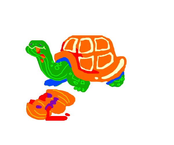 A tortoise eating a jack-o-lantern