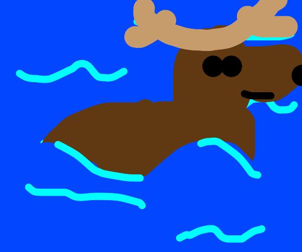 moose in da water