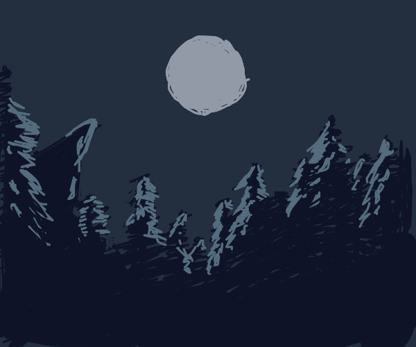 Forest at midnight