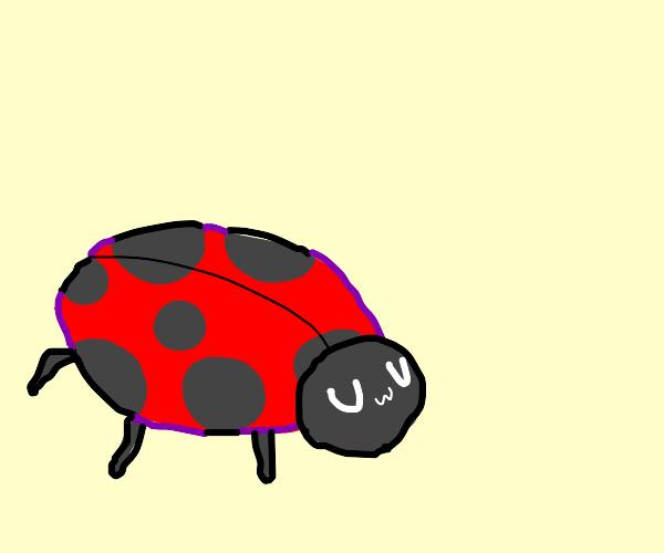 UWU ladybug