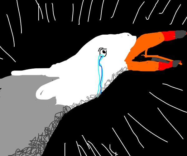 Sad sad gull