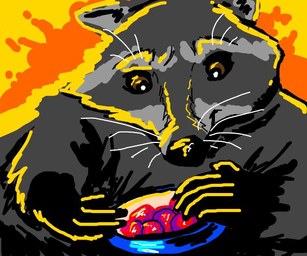 a raccoon eating a grape