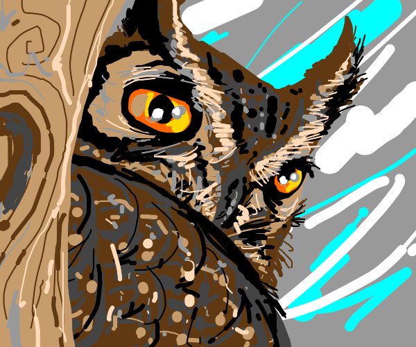 Owl stares back