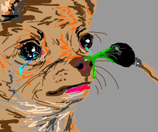 Sad dog with painting brush