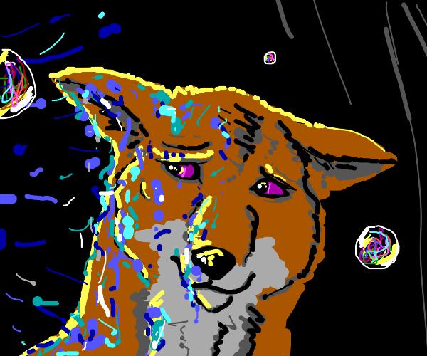 fox fears water