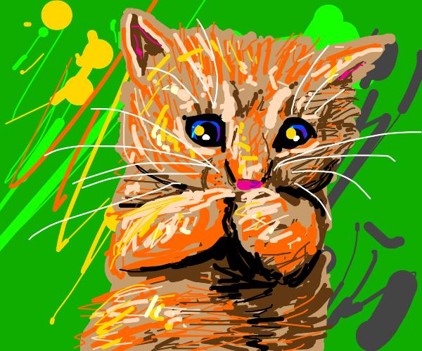 Cute little orange kitty!!!