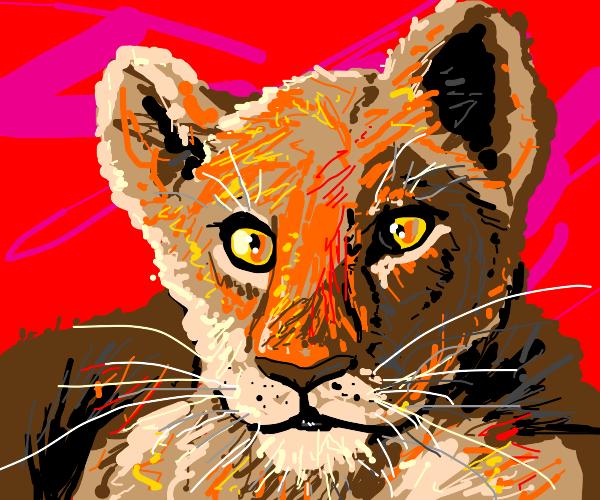 A glorious lion cub