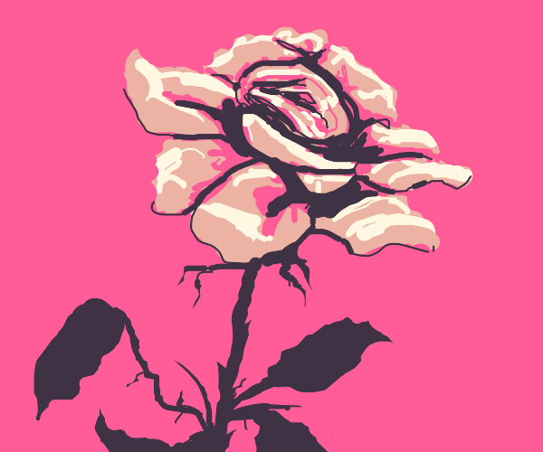 A rose with black stem