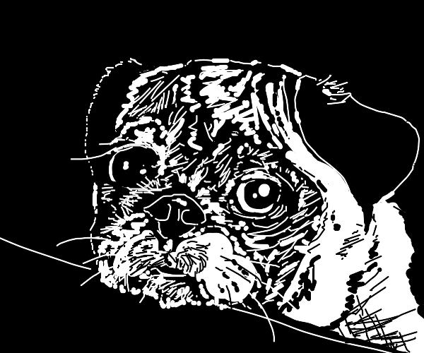 Depressed dog stare