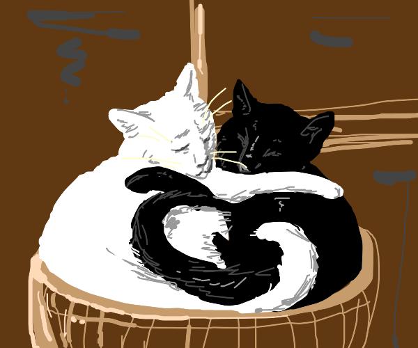 Yin yang, but cats