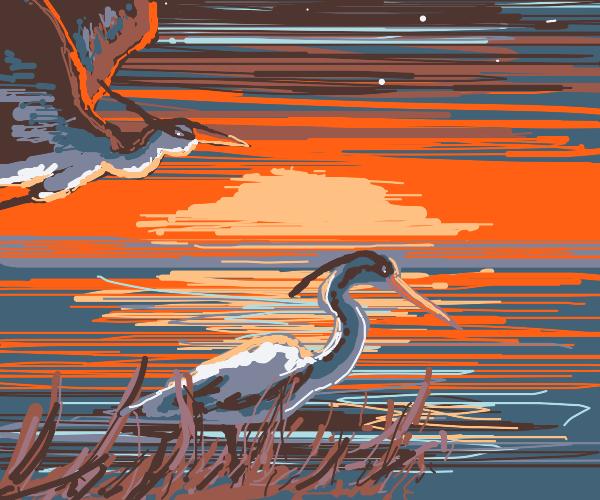 beautiful herons