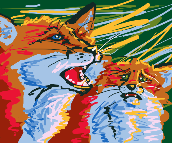 Two foxes, one is scared