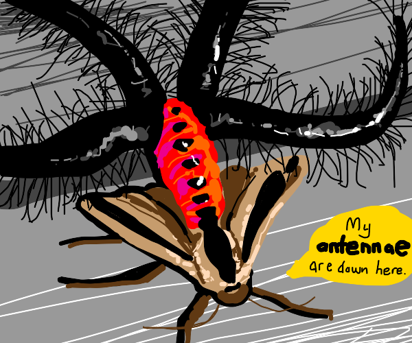 A black moth has strange antennae.