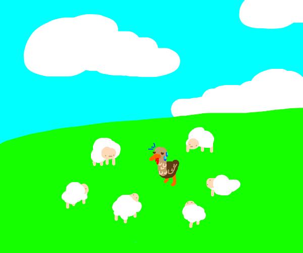 Sheeps surrounding a vulnerable turkey