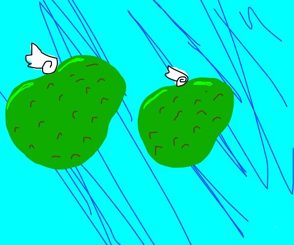 Flying avocados