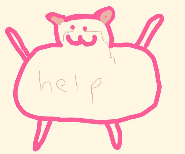 a pink fat cat