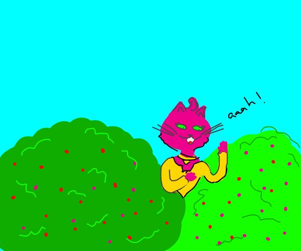 cat girl screams in berry bush