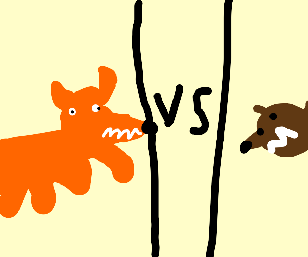 fox vs bear