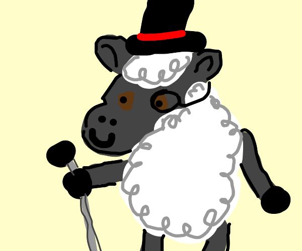 dapper sheep