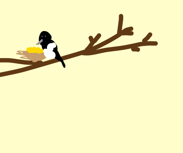 Magpie with a nest full of treasure