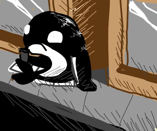 Poor Orca