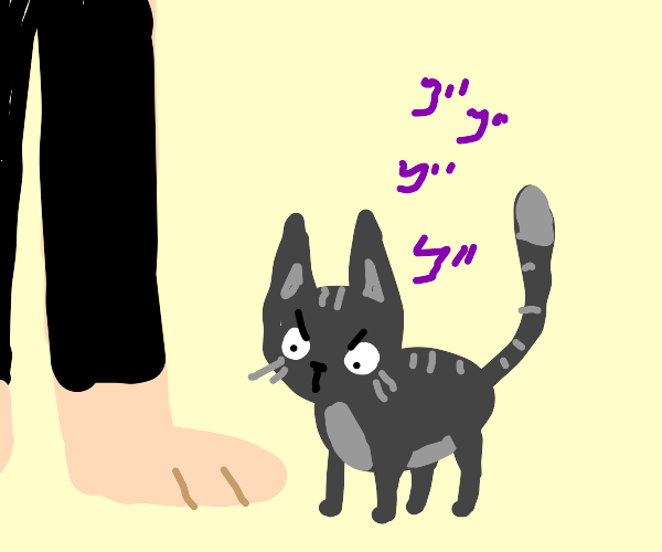 cat menacingly looking at toes