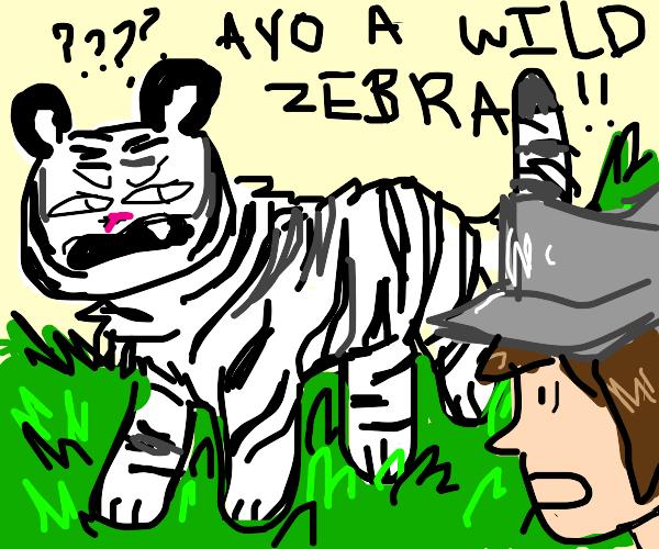 Tiger looking like a zebra