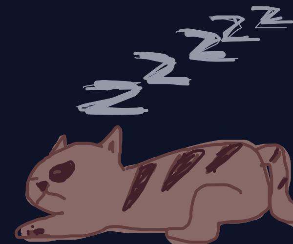 Sleeping lynx