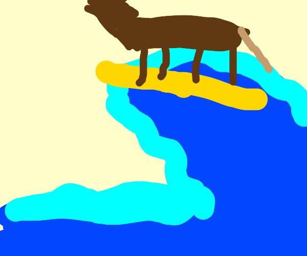 surfing horse