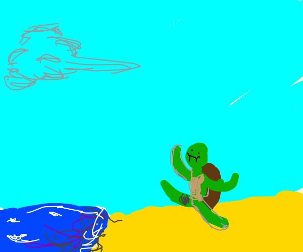 baby turtle walking towrds ocean