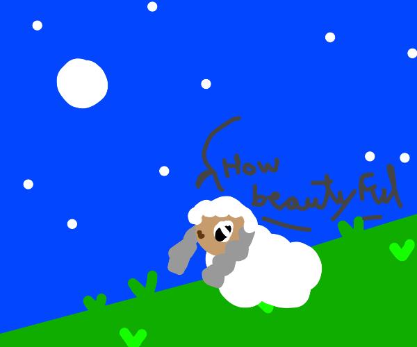 Sheep thinks night sky is 'Baautiful'