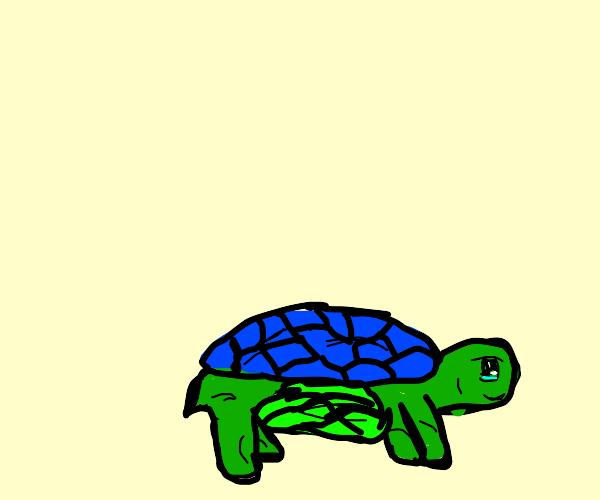 Turtleception