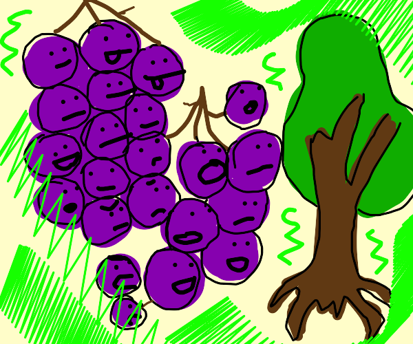 2 bunch of grapes watch Nature