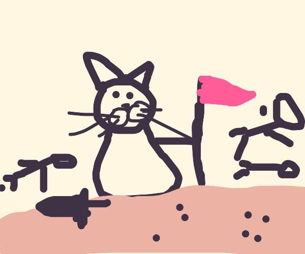 Cat Conquering
