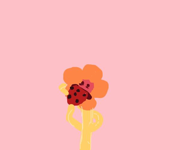 A flower eats a cookie