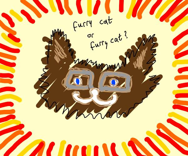 Brown furry cat wearing gray glasses
