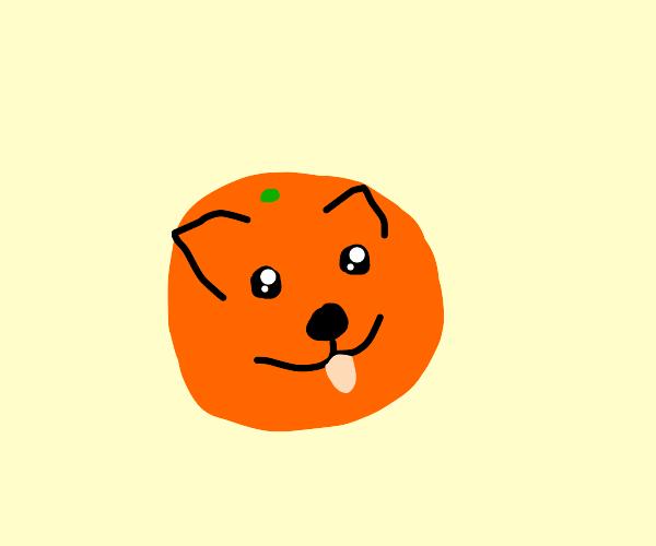 Corgi orange