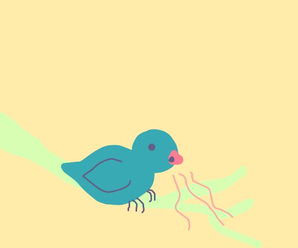 a bird smells something