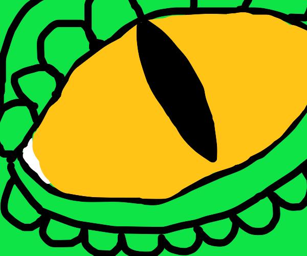 Reptile eye: extreme closeup