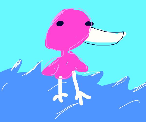 Beautiful Flamingo in water