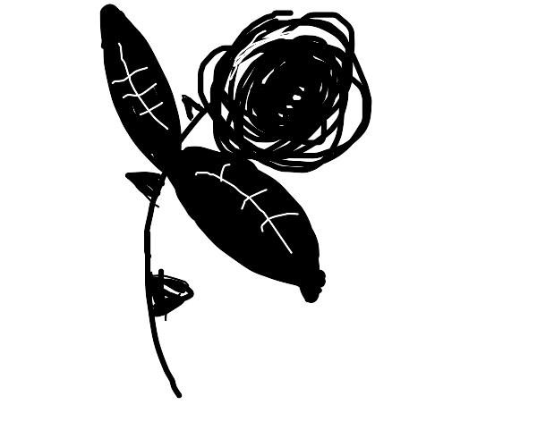 A monochrome rose