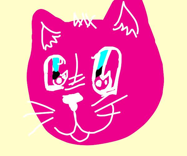 a pink cat