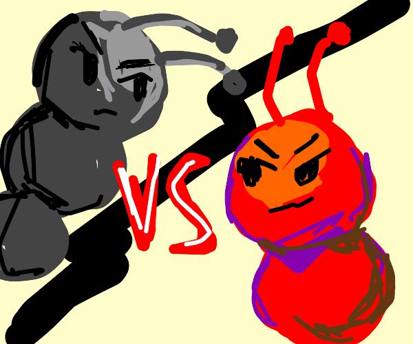 Black ant vs red ant