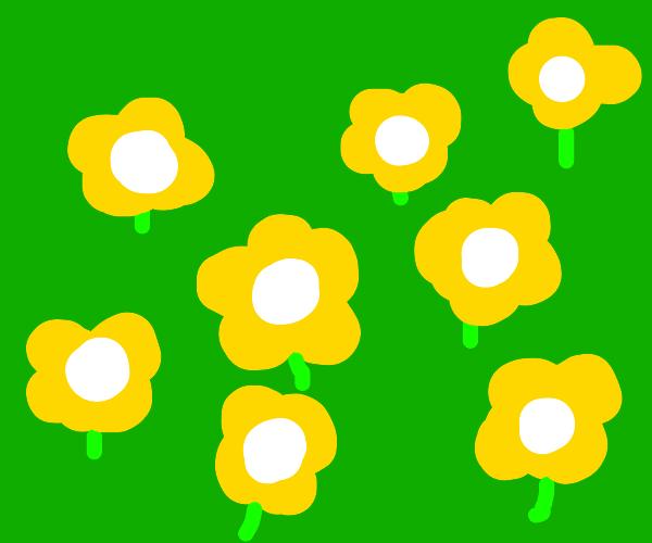 many flower