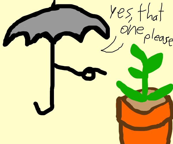 Umbrella chooses a plant
