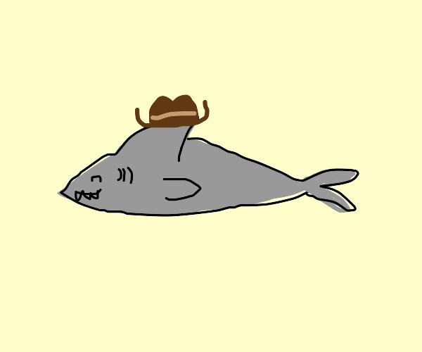 shark cowboy
